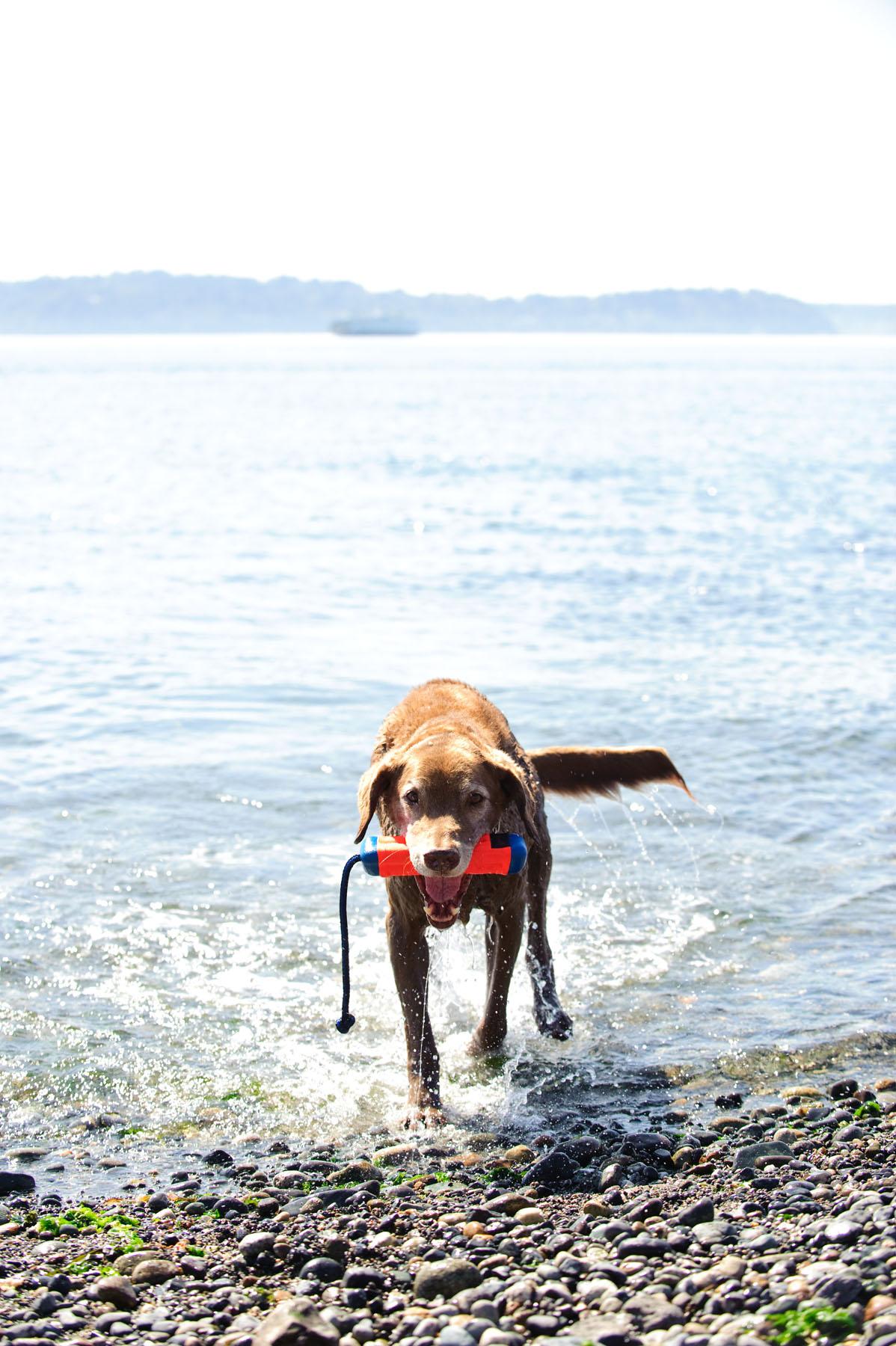 Canine Hardware Images