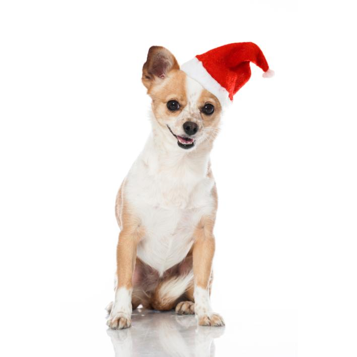 Good Boy Santa Hat for Dogs