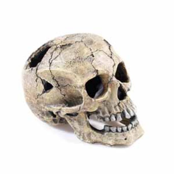 Classic Cracked Skull