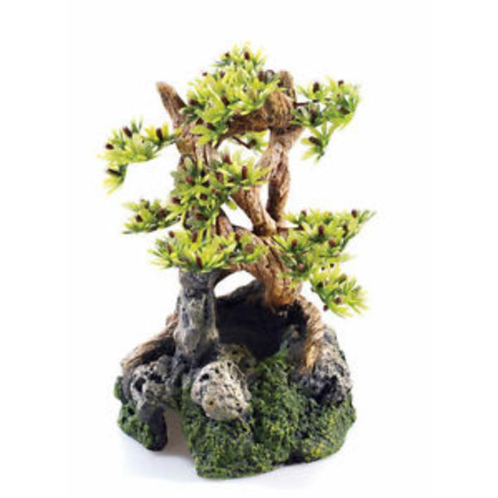 Classic Bonsai on Rocks