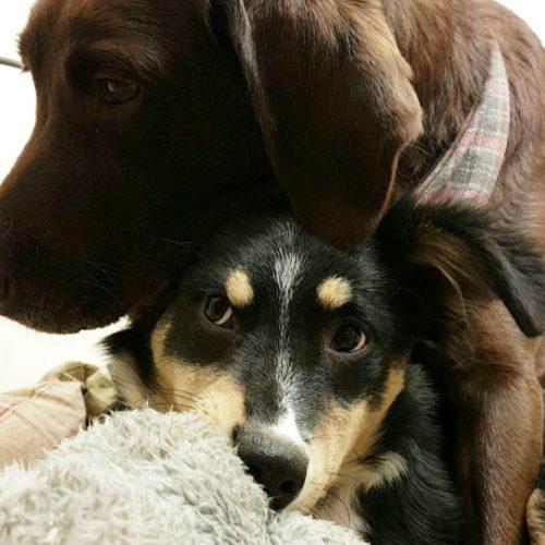 Bella and Mia