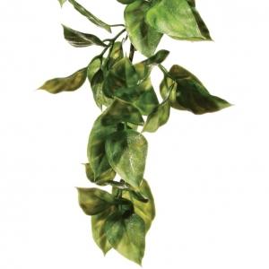 Exo Terra Amapallo Hanging Rainforest Plant