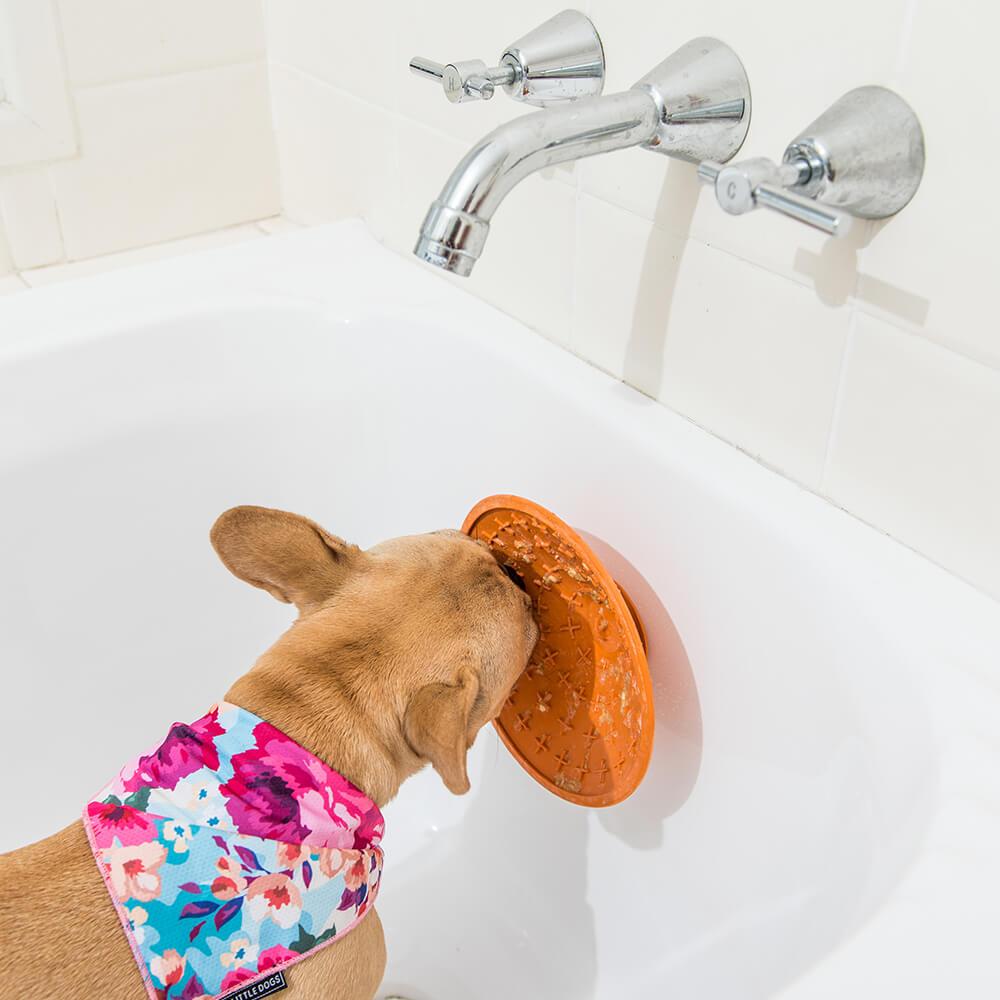 LickiMat SPLASH Treat Bowl LIFESTYLE