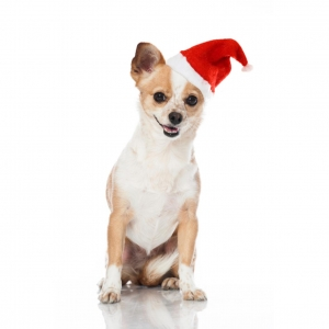 Good Boy Pawsley & Co Santa Hat