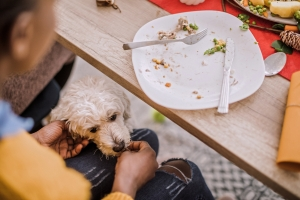 12 Foods To Avoid Feeding Your Dog This Christmas