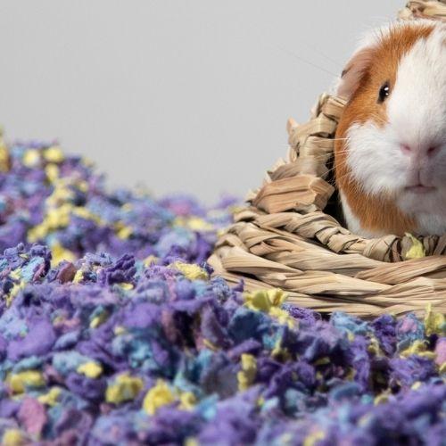 Carefresh Small Pet Bedding 10L Confetti & Sprinkles